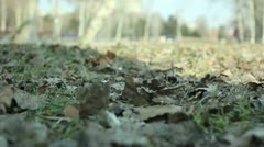 Park (autumn leaves) _7 Stock Footage