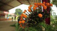 Flower Orange Ball Stock Footage