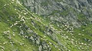 Stock Video Footage of sheep on mountain rocks