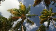 Stock Video Footage of Palms on sky and clouds background
