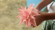 Holding pink torch flower! Stock Footage