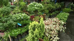 Store selling plants - stock footage