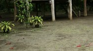 Bamboo house on stilts Stock Footage