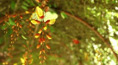 Closeup of an Orchid. Stock Footage