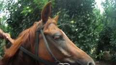 Stock Video Footage of 428 GoPro, A moving horses profile