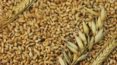 Grain - stock footage