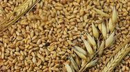 Stock Video Footage of Grain