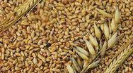 Stock Video Footage of Grain