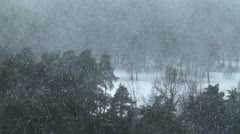 Snowfall in the spruce forest in winter Stock Footage