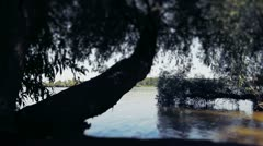 Tree by the River - stock footage