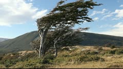 The wind shaped trees in Ushuaia in Tierra del Fuego Stock Footage