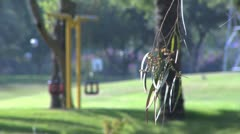 040 TWO SWINGERS IN A PARK Stock Footage