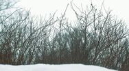 Winter plants Stock Footage