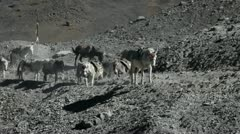 Donkey and mountain Stock Footage