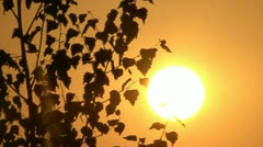 Sunset. The sun and the birch in contour. Stock Footage