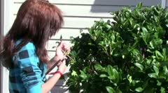 Pruning Bushes Stock Footage