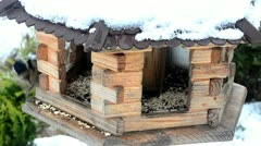 Birds in winter Stock Footage
