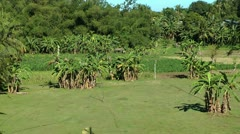 Farmland with corn ripening in the summer sun in the Philippines Stock Footage