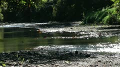 River in the forest dries out during dry season in the Philippines Stock Footage