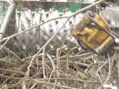 Equipment crush branch Stock Footage