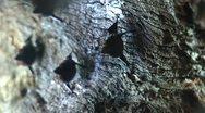 Bats Stock Footage