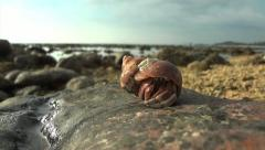 Beach Crab Stock Footage