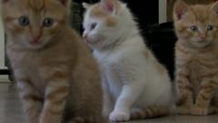 Cute kittens looking around Stock Footage