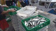Stock Video Footage of Tenerife, Fishmarket at harbour Los Cristianos