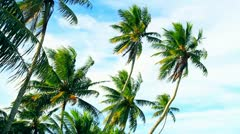 Remote Pacific Island Palm Trees Stock Footage