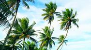 Stock Video Footage of Remote Pacific Island Palm Trees
