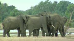 Elephants at waterhole - stock footage