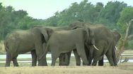Stock Video Footage of Elephants at waterhole