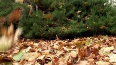 autumn leaf fall - stock footage