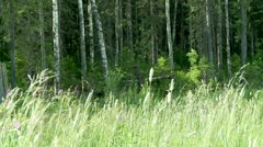 Outer wood. Stock Footage