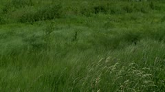 The wind and Grass waves Stock Footage