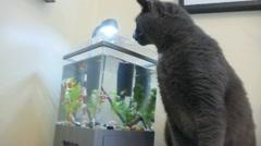 Hungry Cat Seeking Fish Stock Footage