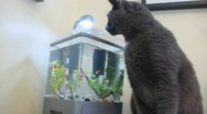 Stock Video Footage of Hungry Cat Seeking Fish