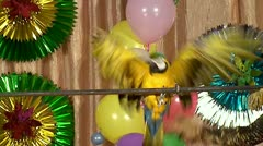 Shaw of the trained circus parrot. Stock Footage