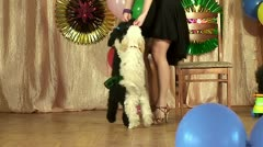 Performance of trained circus dogs Stock Footage