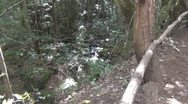 Stock Video Footage of La Gomera, Creek near El Cedro, zoom-in