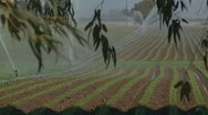 Stock Video Footage of Watering crops in Italy rack focus (three)