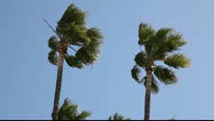 Strong wind Stock Footage