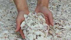 Seashells Stock Footage