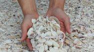 Seashells Stock Footage