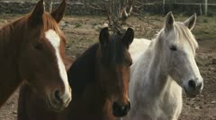 Horses, ranch animals looking at camera in farm - stock footage