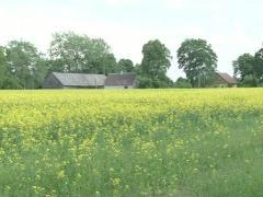 Houses oilseed rape field Stock Footage
