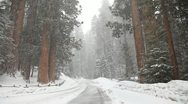 Snow storms and road closures in Sequioa National Park PT3 Stock Footage