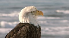 Bald Eagle Close Sea Background Stock Footage