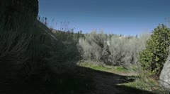 Trail in Natural Park Stock Footage