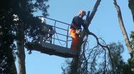 An arborist cutting a tree with a chainsaw Stock Footage